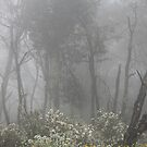 Mt Donna Buang by BlackSunshine