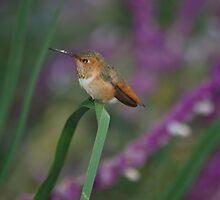 Smallest bird in the World by loiteke