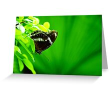 Butterfly on green leaf Greeting Card