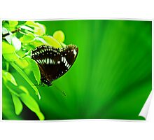 Butterfly on green leaf Poster