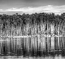 Tree Reflections - Narrabeen Lakes, Sydney Australia( B&W) - The HDR Experience by Philip Johnson