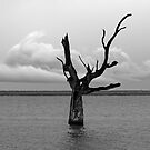 A Gray Day at Lake Bonney by Bill  Robinson