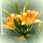 Two yellow lily by Ana Belaj