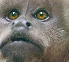 Weeper capuchin Sticker