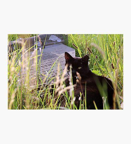 Pet Cemetery Photographic Print