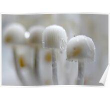 Fungi parade Poster