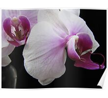 An Orchid View Poster