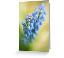 Pearly 1 Greeting Card