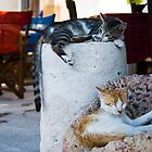 Cat Nap by Mariano57