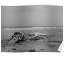Driftwood on the beach Poster