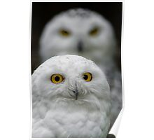Snowy Pair Poster