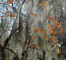 Crepe myrtle & Spanish moss by Mike Shell