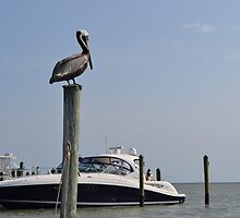 Boating in Florida by awelshboy