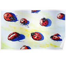 Ladybugs Bring Good Luck Poster
