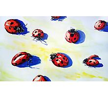 Ladybugs Bring Good Luck Photographic Print