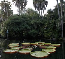 Giant Lily Pads by Laurie Perry