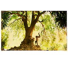 Handstand by the tree Photographic Print