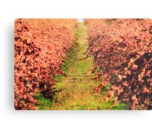 Winter Grape Vines Metal Print