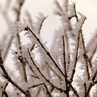 Rime Ice on Plum Branches by Eric  Neitzel