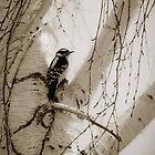 Bird by Nathalie Chaput
