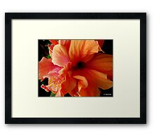 Glorious Orange Hibiscus Flower Framed Print