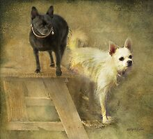 Happiness Is My Chihuahua Girlz by Rhonda Strickland