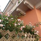 Roses In Italy by joycee