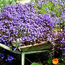 Purple Haze by joycee