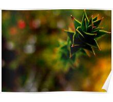 Tasmanian Flora on Dove Lake  Poster