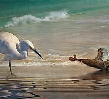 Snowy Egret and Driftwood by Tarrby