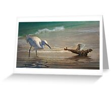Snowy Egret and Driftwood Greeting Card