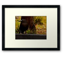 The Clever Crow Framed Print