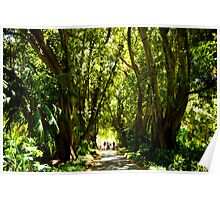 Plane Tree Drive, Adelaide Botanic Gardens Poster