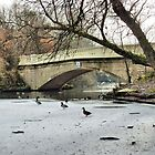 Frozen Boating Lake  by Lilian Marshall