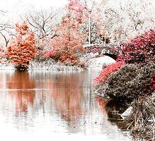 Central Park. by Stuart  Noall