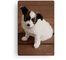 Pappilion Pup Canvas Print