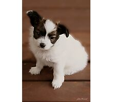 Pappilion Pup Photographic Print