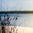 Reeds and Lake by Brodes1203