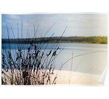 Reeds and Lake Poster