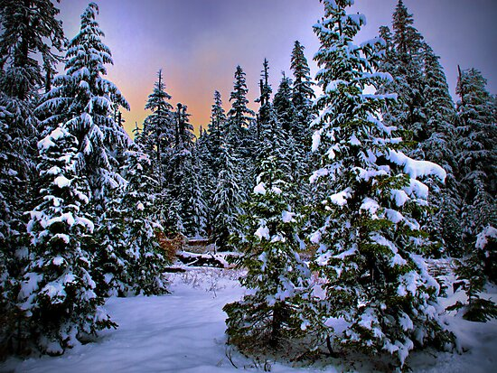 I Love Snow by Charles & Patricia   Harkins ~ Picture Oregon