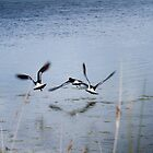 Birds over Lake by Brodes1203