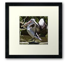 Karate Pelican Framed Print