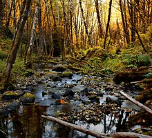 Open Your Eyes by Charles & Patricia   Harkins ~ Picture Oregon