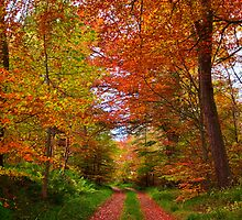 Autumn Walk by scottalexander