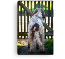 Brown Roan Italian Spinone Dog Canvas Print