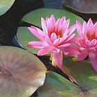 Louise Villemarette Water Lillies by Robert Armendariz