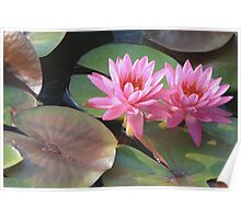 Louise Villemarette Water Lillies Poster