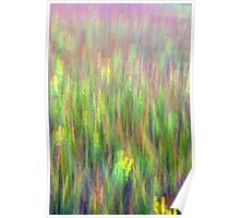 A field of grasses Kitty Todd Nature Preserve  Poster