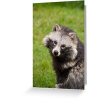 Raccoon Dog Greeting Card