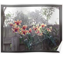 Orchids on a Fence Poster